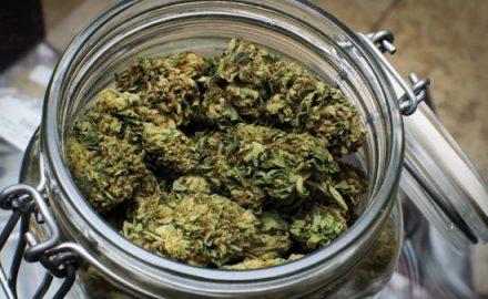 medyczna marihuana w leczeniu onkologicznym raka