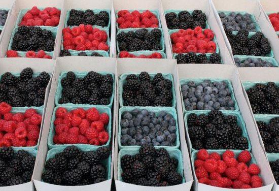 Potencjał owoców jagodowych w profilaktyce przeciwnowotworowej