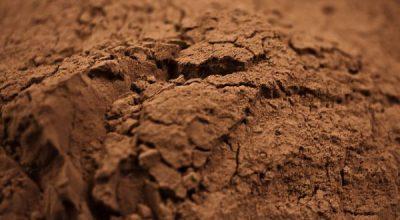 kakao polifenole nowotwory