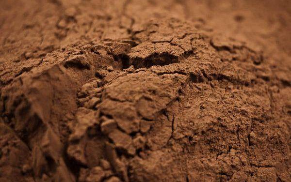 Czekolada gorzka i kakao – bogactwo polifenoli