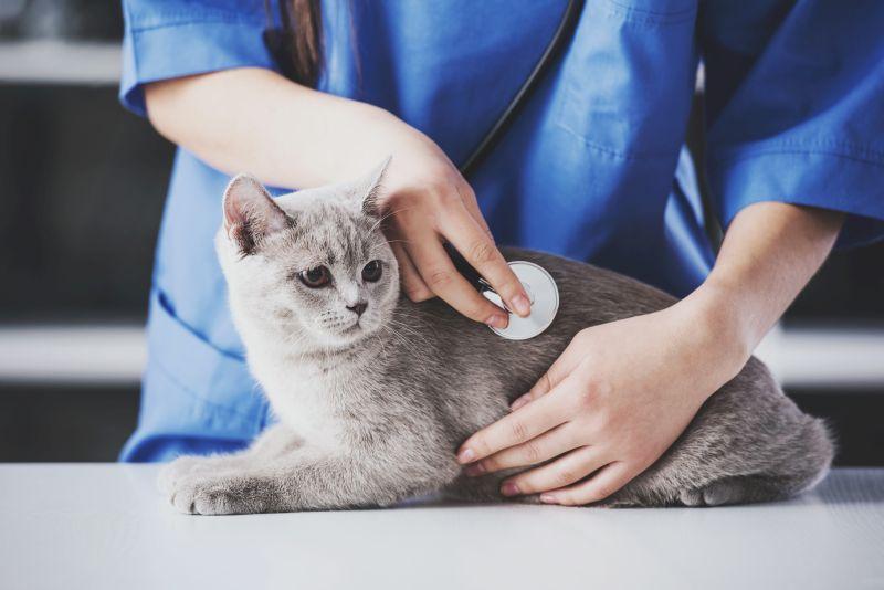 nowotwór u kota