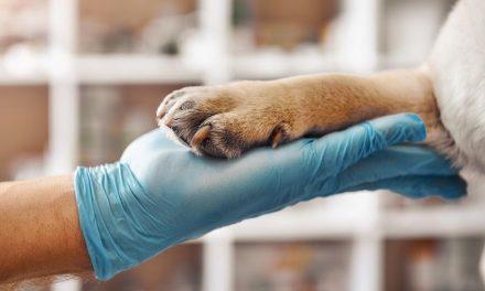 Nowotwór u psa i kota – objawy i diagnostyka